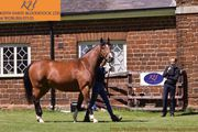 A Top Rated Bloodstock Services Provider